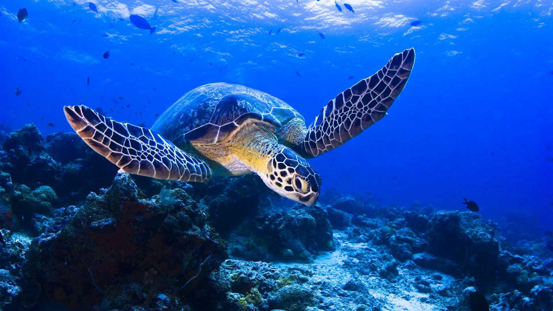Observer la ponte des tortues marines ou assister à l'éclosion de leurs œufs est un spectacle aussi rare qu'inoubliable sur l'archipel de Sao Tomé-et-Principe