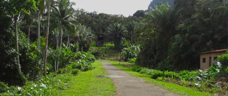 Randonnée à travers la plus grande Roça de l'île de Principe et son héritage cap-verdier et une vue magnifique sur la ville de Santo António