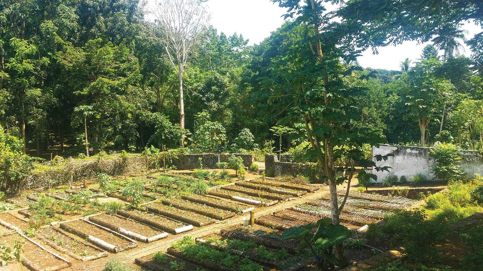 A la découverte des secrets de l'agriculture biologique à la Roça Paciência, odeurs et saveurs de l'île de Principe