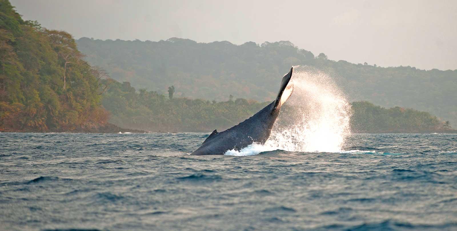 De juillet à septembre, vivre une expérience exceptionnelle avec l'observation des cétacés dans leur habitat naturel, Sao Tomé-et-Principe