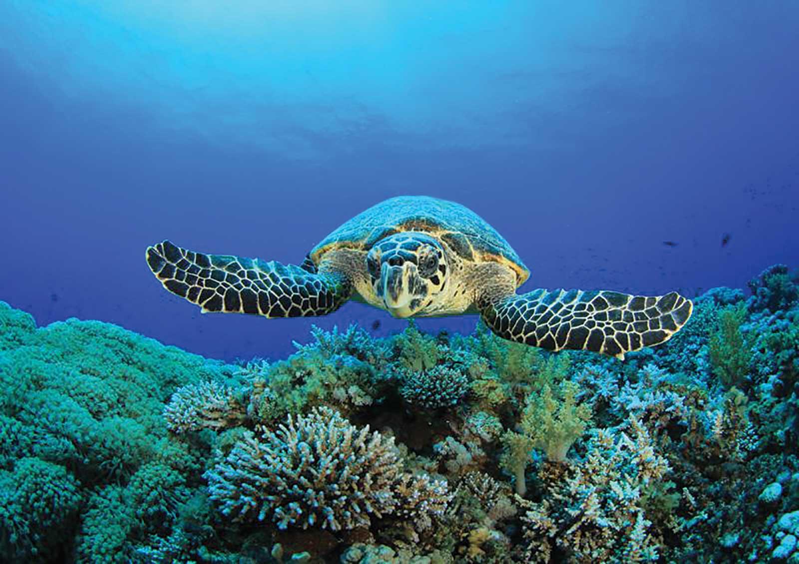 Sortie nocturne pour aller à l'encontre des tortues et de surveiller la ponte sur les plages de l'îlot de Rolas entre novembre et mars