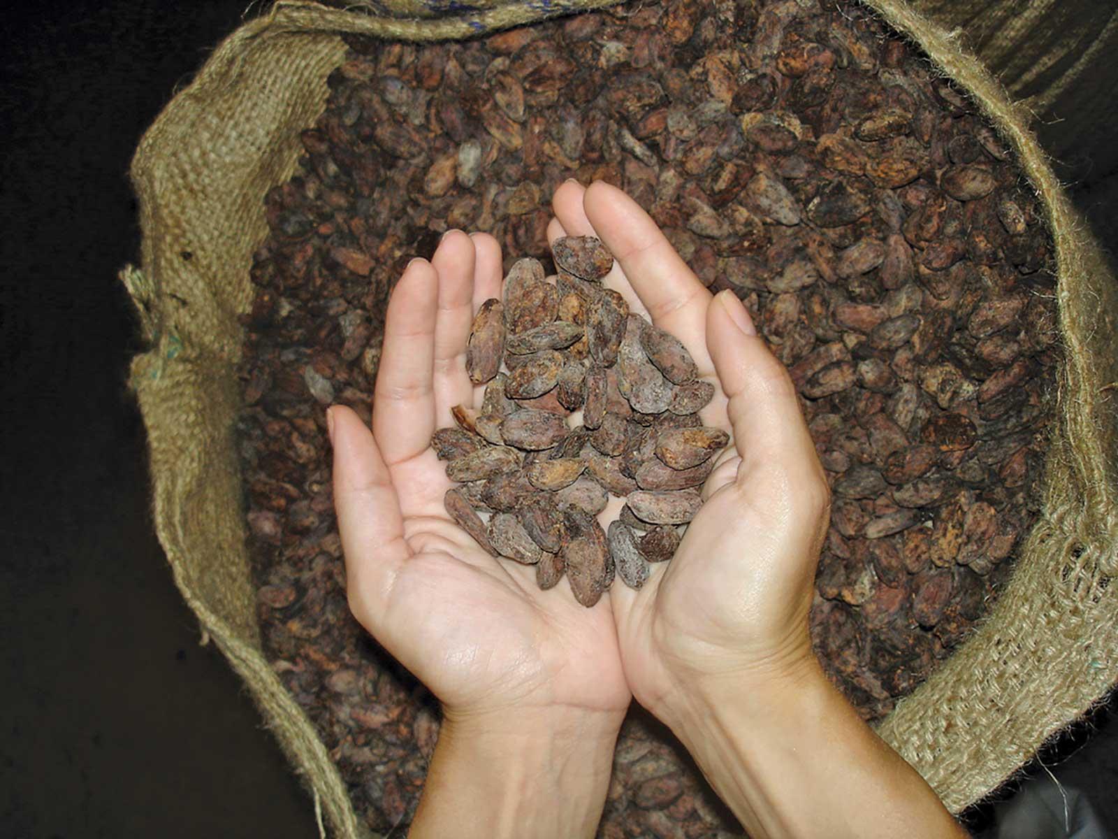Visite de plantations de cacao et du processus de production et de transformation du cacao, vue panoramique sur le principal pôle économique de l'île de Sao Tomé