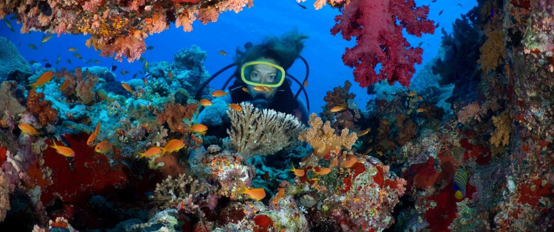 richesse préservée de la faune et de la flore, font de Sao Tomé-et-Principe une destination d'exception pour les amateurs de plongée et de snorkeling